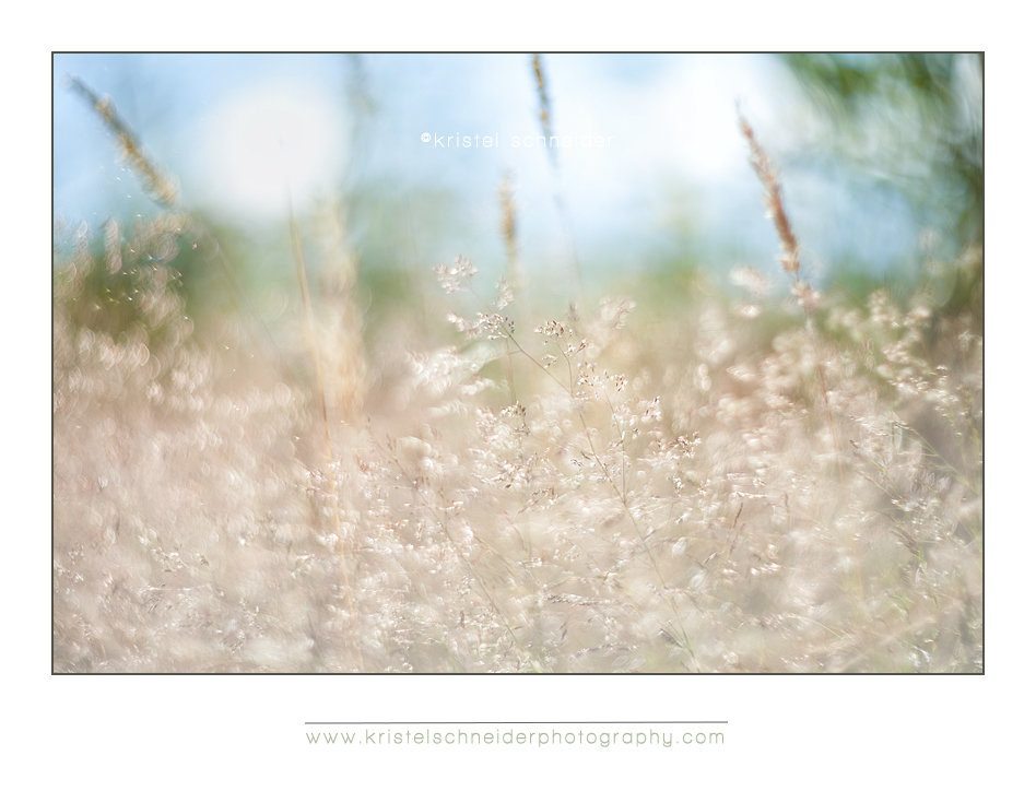 Mix grasses with backlight