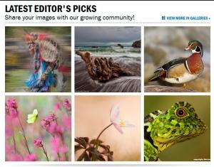 Editors-pick_wood-anemone
