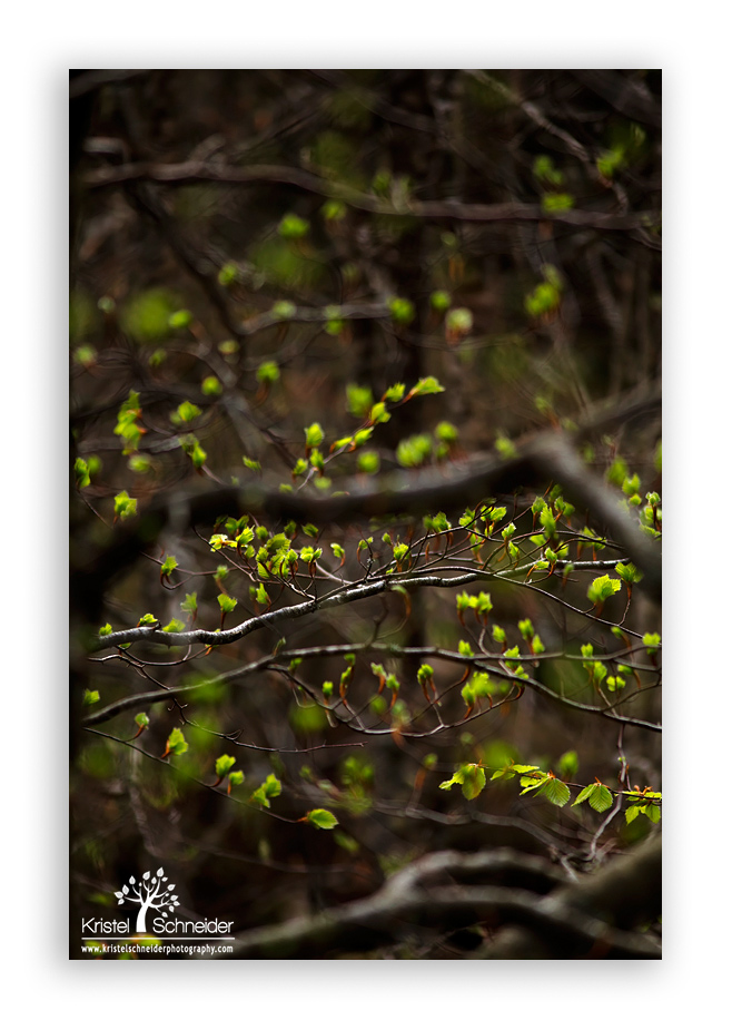 Fresh-greens-between-branches