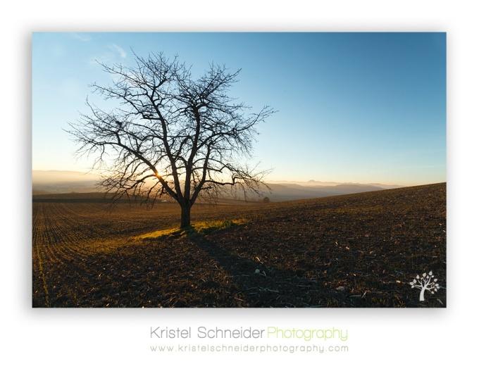 Tree-in-evening-sun_Billom-area