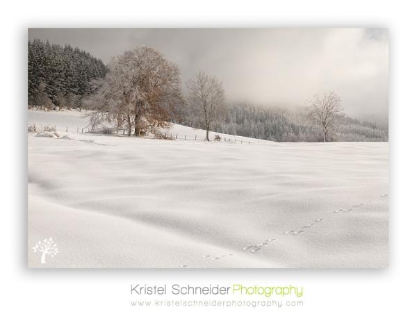 Livradois-Forez-winter-scenery auvergne