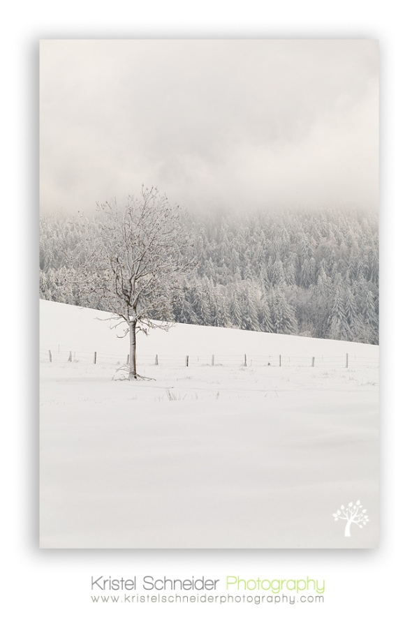 Trees-with-frost