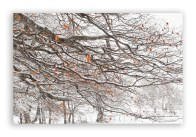 Beech-tree-branch-in-winter_2