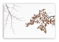 Beech-tree-branch-in-winter_5b