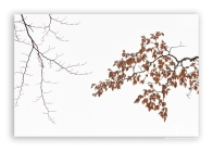 Beech-tree-branch-in-winter_5b