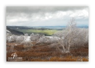 Birch-trees-with-frost_5