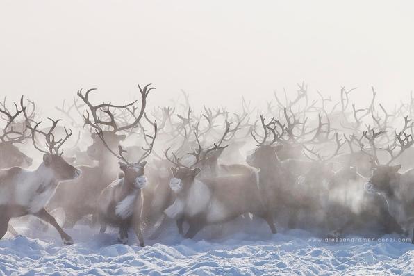 AMeniconzi_Siberia_Nenets_3018xs-web