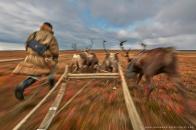 AMeniconzi_Yamal_Reindeers_Nenets_0755-web