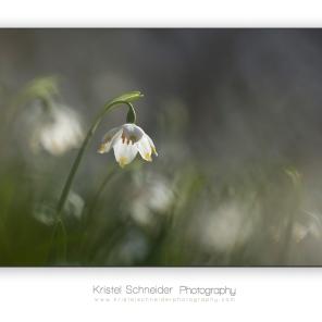 Spring-snowflake_2