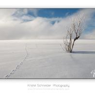 Summit-Montagne-des-Allebasses_2