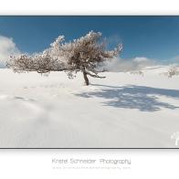 Summit-Montagne-des-Allebasses_4