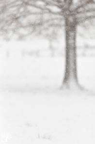 Falling-snow_KristelSchneider_3