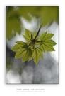 Fresh-greens-may