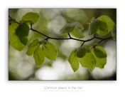 Fresh-greens-May_2
