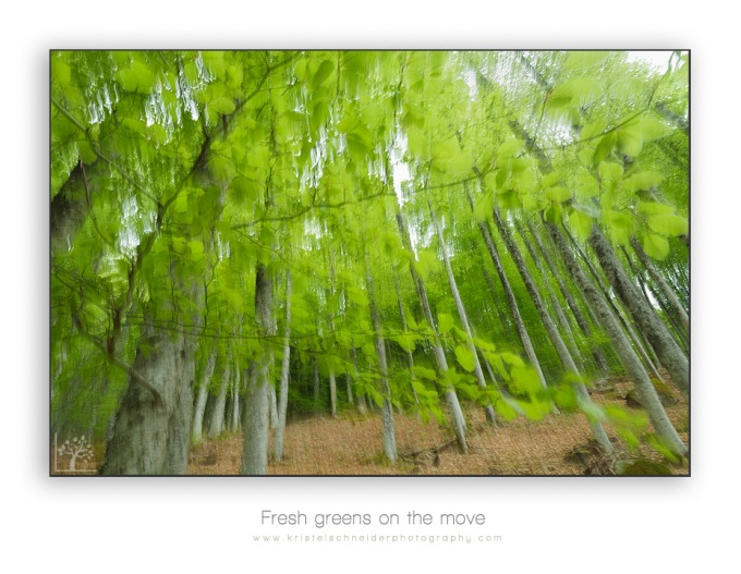 Fresh-greens-on-the-move
