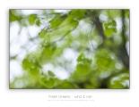 Fresh-greens_2