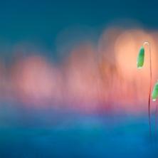 © Misja Smits