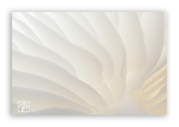 Porcelain-Fungus-Kristel-Schneider