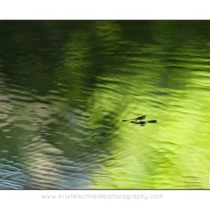 Pond-Skater