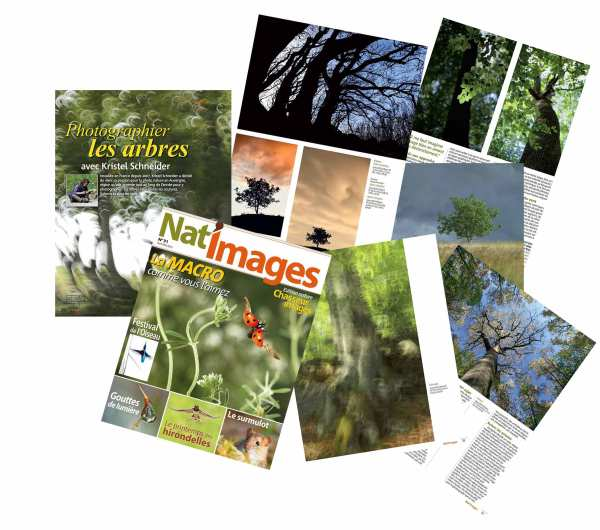 Publication-Natimages-31-Vairaiontions-in-trees-JPGlow