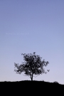 Kristel-Schneider_Inspired-by-a-single-tree_5