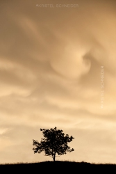 Kristel-Schneider_Inspired-by-a-single-tree_After-the-storm_8