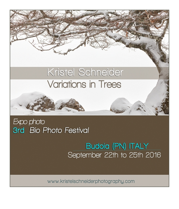 Variations in Trees expo